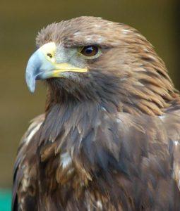 face reading eagle nose