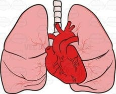 Metal lung and Heart